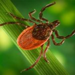 Mosquitoes and Ticks – Little Pests Carry Big Risks
